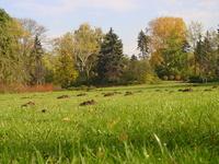 Molehills on the autumn meadow