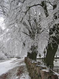 winter in Neugarten 1