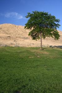 desert green 2
