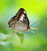 Various Butterfly Shots 4