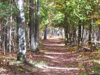 Walk in the Woods 4