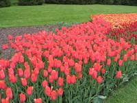 Longwood Garden Flowers