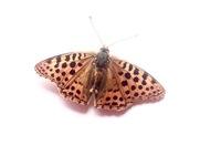 Mothy