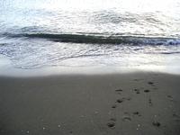 sea 3