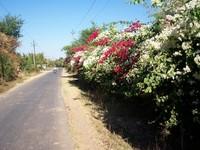 Rural road 1