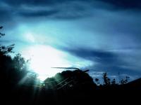 Sunbeams In My Backyard