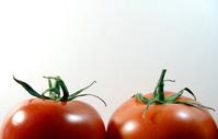 Tomatoes 7