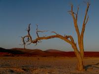 dead tree 2