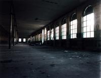 abandoned plant 2