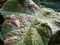 Leaf Textures 6