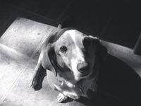 Tippy, mixed breed dog