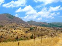 Olive Hain Crete