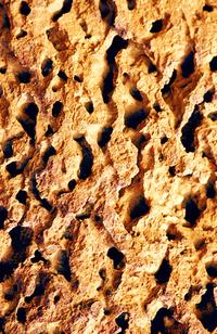 Wassu Stone Detail