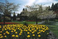 Flowers in Stanley Park 7