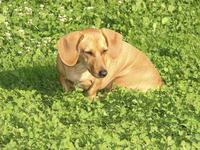 My dear dog 1