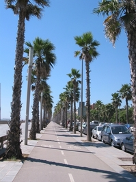 Barcelona Blvd