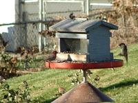 Bird Feeder Landing