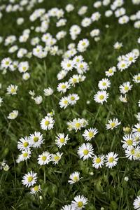 Summerflowers_ 1