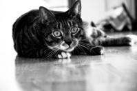 a cat 5