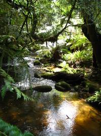 River in Tasmania 1