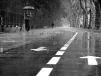 Buenos Aires Summer Rain