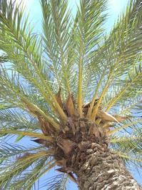 Palm tree le lavendou