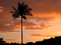 Palm Tree at Sunrise