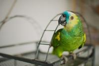 Amazonas Parrot 3