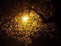Autum Street Light
