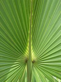 Palmetto Folds