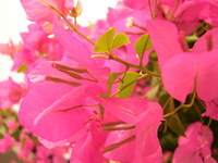 botany 5