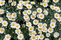 flowering flowers