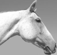 Bella: a horse profile