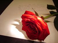 Rose concept