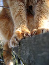 cat claws