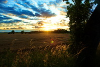 Sunset over cornfield