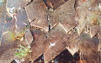 nature stock photo 3