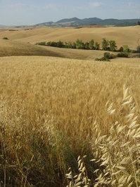Toscana Tuscany 2