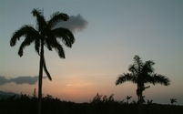 Tropical sunset 5