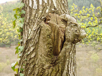 Tree-trunk 1