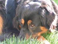 Casey in the Sun