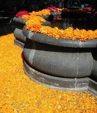 flowers and petals on a founta