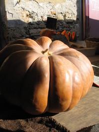 A pumpkin at the market 1