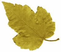 Leaf Tones 2