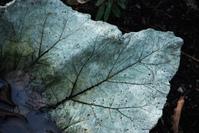 Stone leaf