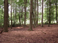 Nature Nederland 5