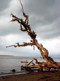 witness(old tree)