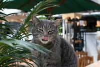 Yawning cat 4