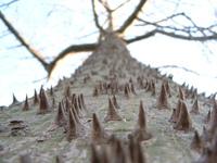 Hell-Tree