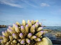 Coral reef , Maldives